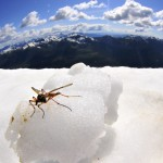 Chillin Bug
