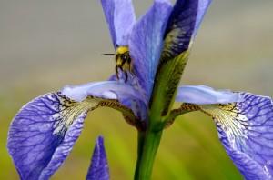 Peek-a-Bee