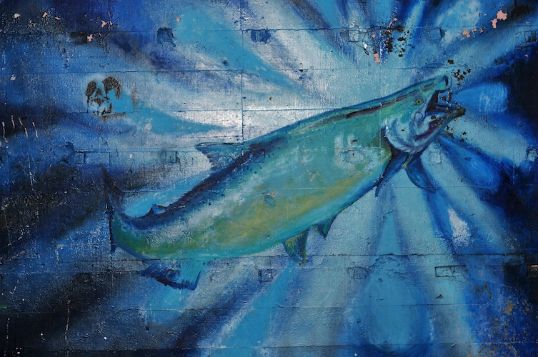 Salmon Inspiration