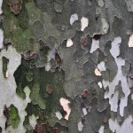 Bark Textures.