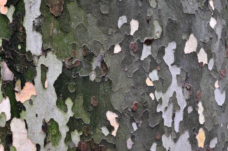 Bark Textures.