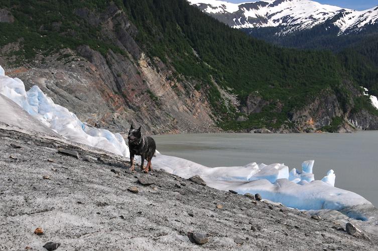 Glacier Dog