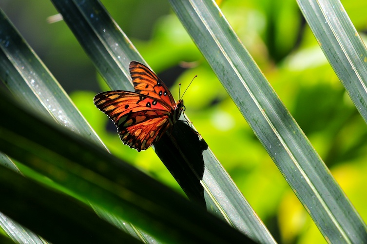 Butterfly + Frond